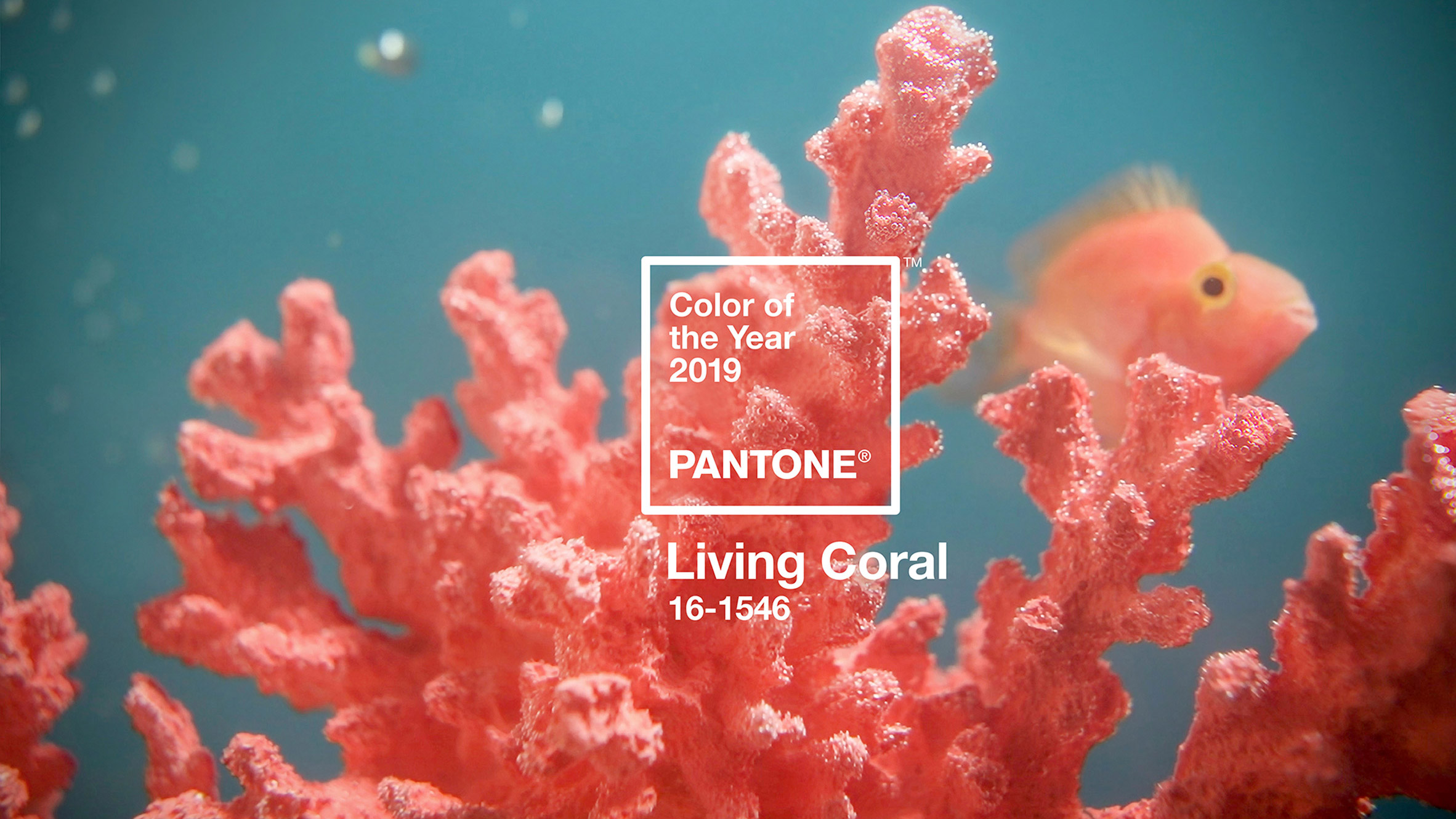 pantone-colour-of-year-2019-living-coral-design_dezeen_hero-852x479